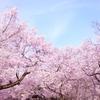 3月27日は「さくらの日」~桜の名曲集めました!~