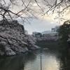 【東京散策】千鳥ヶ淵の桜。今、見頃です。(2019/3/31)