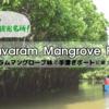 世界最大級のマングローブ林!インドのピチャワラムマングローブ林で手漕ぎボートに乗ってきた