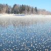 自然が生み出す冬の絶景に感動・・・氷の芸術フラワーフロスト素晴らしい
