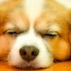 老犬の目が見えなくなったら気を付けるべきこと・原因