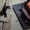 薪ストーブを焚いた日 逃げ腰 On the day the stove was burned