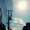 太陽の縊死体、白昼に揺れる百合