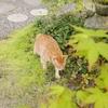猫好きはどこまでも!松山庭園美術館の猫展へ行ってきたよ