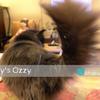 猫ログ:今日の王子 8