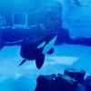 写真でめぐる名古屋港水族館1『シャチ』