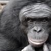 動物の持つ倫理感