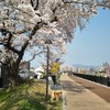麦と一緒に、平成最後の桜