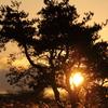 冬の太陽と樹木とすすき