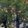 これは橘ですか?また、ウチって、訛ってるんですか?