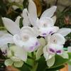 「まつこの庭」・春のラン(1)