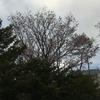 「菜の花の沖」はついに北海道へ!