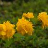 西門の花!(2021年4月15日)