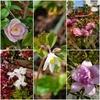 庭の花たちが生き生きと