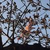 春。エサレンボディーワークで、季節の変化の波を心地よく♡