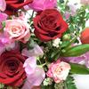 春の花 (ハートローズ)