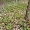 マムシグサとムサシアブミが並んで咲いていました。