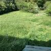 今日は今年初の本格的な草刈りでした。