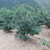 柚子の木にプチ柚子玉。
