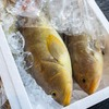 2020年11月25日 小浜漁港 お魚情報