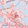 桜を見ると子供の入学式を思い出す