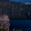 北の夜桜 - Northern Cherry Blossoms at Night