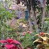 庭での発見、季節の庭仕事