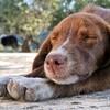 大キライな虫歯治療中、あなたはきっと「寝落ち」する✨【マインドフルネス式呼吸法】をご紹介。