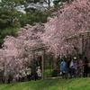 半木の道(なからぎのみち)京都植物園西の賀茂川沿い