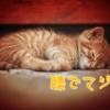 まばたきサインで猫が膝でマジ寝!?猫を飼って長いけど人生初の経験