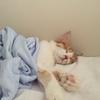 イトーヨーカドーのひんやりタオルケットと猫。