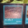 2019/1/27 イシガレイ再び
