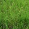 ふたつ目3つ目の耕起田んぼは、草抜きをしませんでした(田植え後10週目)