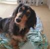 ペットショップで売れ残った犬はどうなる?1万円で売られていた犬。