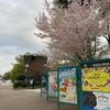 上野公園の桜  台東区上野公園