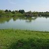 ブログネタを探しに宮島池へ。