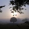 暗く、グレーの秋(冬の始まり)が始まった