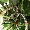 観葉植物でパワーストーンブレスを浄化