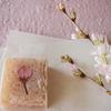 桜の和菓子 中田屋のきんつばさくら