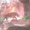 上野動物園に行ってきました!!