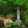 京都 青モミジの参道 曼殊院門跡