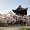 和歌山「根来寺」周辺で花見
