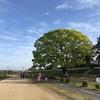 武庫川ラン この樹何の樹?