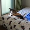 【愛猫日記】毎日アンヌさん#23