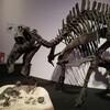 夏休み最後のお出かけ。上野の国立科学博物館『恐竜博2019』(後編)