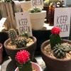 新宿駅の雑貨屋さんでお洒落な植物を発見🌵🌺