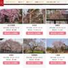 今年の京都の桜・水火天満宮の紅しだれ桜と京都御苑のしだれ桜