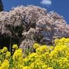 春の兆し、アスパラ編
