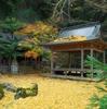 2016年 京都の秋の紅葉は郊外から 穴場3か所