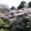 振り返りブログ 満開の桜